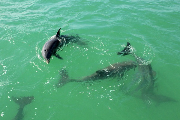 Dolphin Watch: Amazing things to experience in Key West